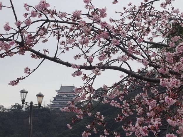 河津桜と熱海城
