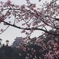 Photos: 河津桜と熱海城