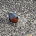 Photos: 可愛い野鳥