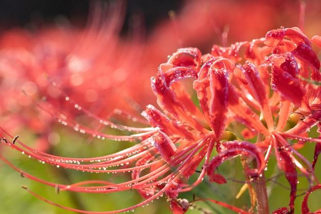 夜露に濡れる秋の花
