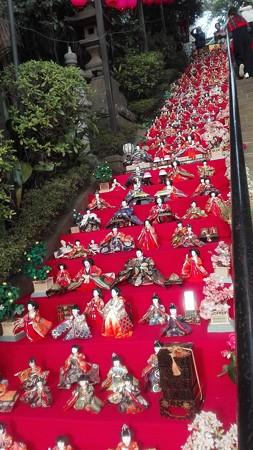 ひな祭り@座間神社