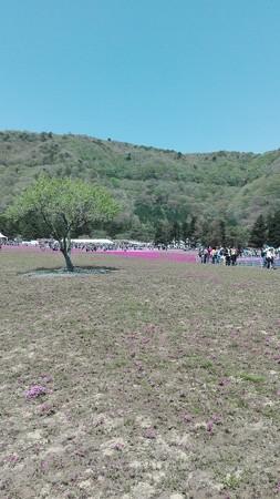 こんなのところも@富士芝桜まつり