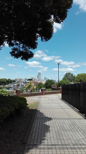 根岸真理公園から横浜を望む