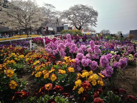 城山の桜と公園内の花