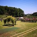 Photos: 野津田公園 バラ園