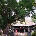 Photos: 佐竹寺 本堂