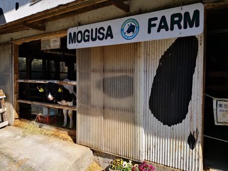 牛舎と子牛の挨拶(Mogusa Farm)