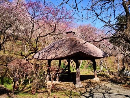 藁葺き屋根の東屋