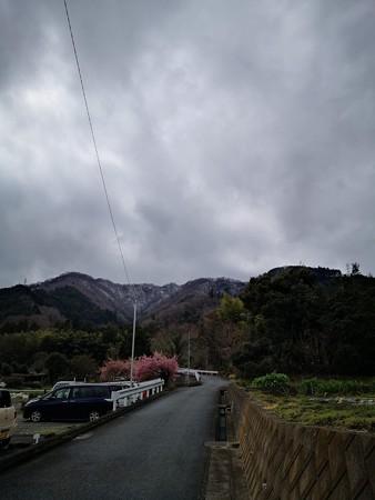 桜と仏果山