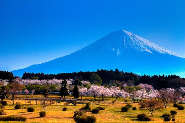 春先、富士の袂より
