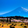 写真: 春先、富士の袂より