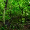 写真: 深緑の小池