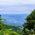 Photos: 茂みの向こうに