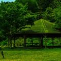 写真: 苔屋根