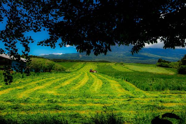 牧草スプライト