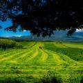 写真: 牧草スプライト