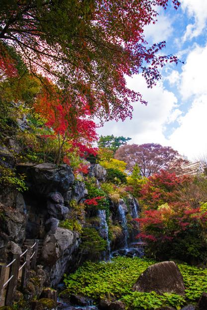 空を仰ぎ、紅葉を楽しむ