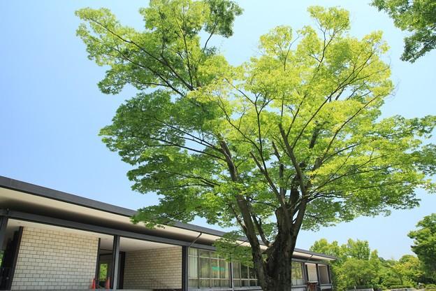 緑と青空の公園