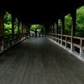Photos: 緑の回廊