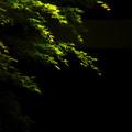 Photos: 緑光