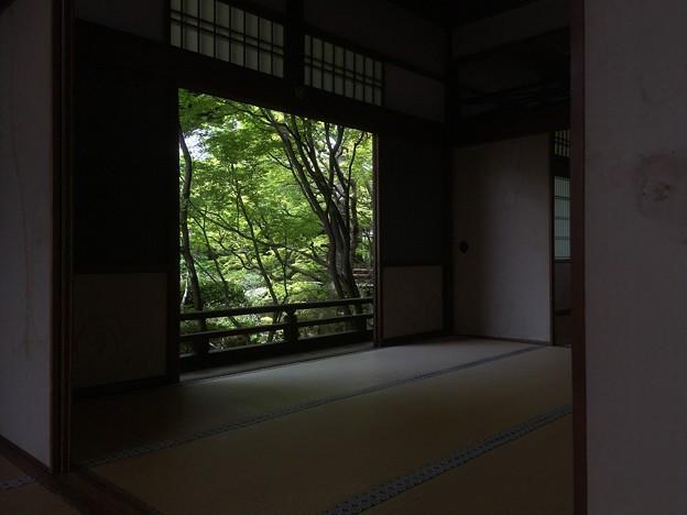 Photos: 額縁の新緑