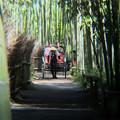 竹林を行く