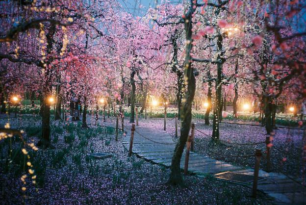 梅の雨の降る夜