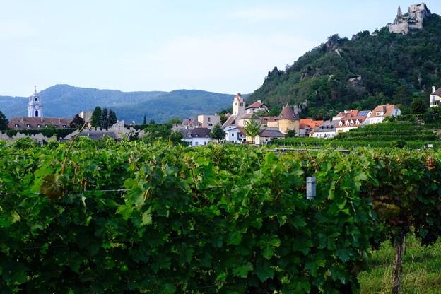 葡萄畑-Dürnstein, Austria