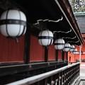 冷たい雨-京都市上京区:北野天満宮
