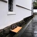 Photos: 冬の雨-大分県竹田市