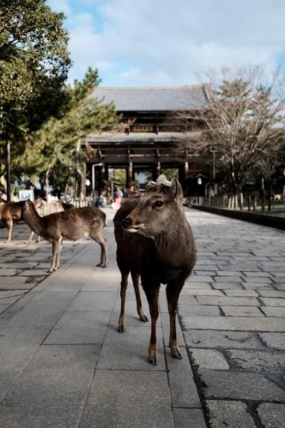 Photos: 心配御無用-奈良県奈良市:東大寺