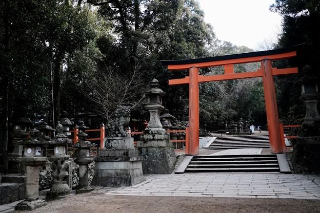 鳥居をくぐって-奈良県奈良市:春日大社