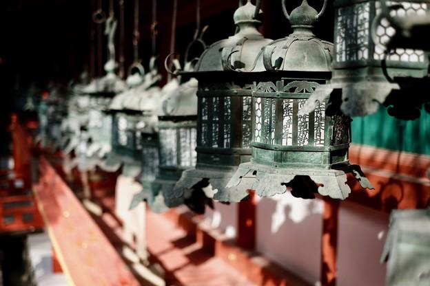 釣燈籠-奈良県奈良市:春日大社