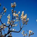 初春の風景-奈良県奈良市:奈良公園