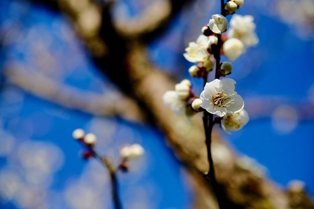 抜けるような青い空-奈良県奈良市:奈良公園