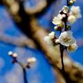 Photos: 抜けるような青い空-奈良県奈良市:奈良公園
