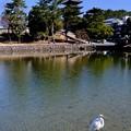 白鷺と五重塔-奈良県奈良市:猿沢池