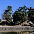 廃仏毀釈-奈良県奈良市:猿沢池