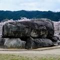 桜を求めて飛鳥の地へ-奈良県明日香村:石舞台古墳