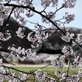 Photos: 小学校の思い出-奈良県明日香村:石舞台古墳
