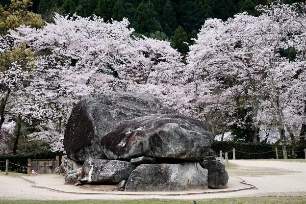 春色の古墳-奈良県明日香村:石舞台古墳