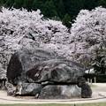 Photos: 春色の古墳-奈良県明日香村:石舞台古墳