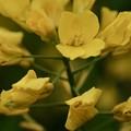 Photos: 今年の春は…-奈良県明日香村:石舞台古墳
