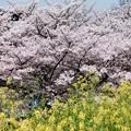 寂しい春-奈良県明日香村:石舞台古墳
