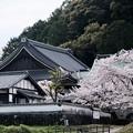 Photos: 聖徳太子ゆかりの寺-奈良県明日香村:橘寺