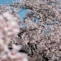 あと何度この光景を-奈良県明日香村:橘寺