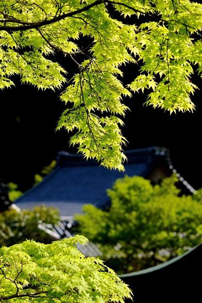 いつまで続くのでしょう-大阪府河内長野市:延命寺