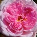 花の寺-奈良県橿原市:おふさ観音