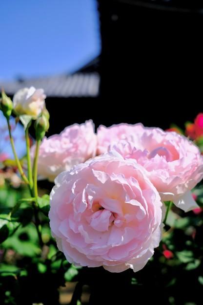 陽光を浴びて-奈良県橿原市:おふさ観音