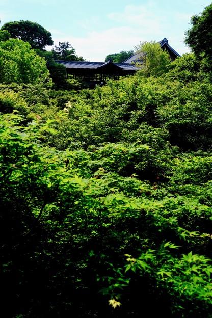 青モミジを求めて-京都市東山区:東福寺